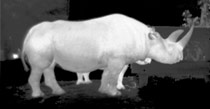 Wildlife Thermal Camera Application